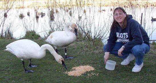 Mrs. Black-swans