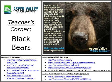 teacher-resource-sample-screen-cap