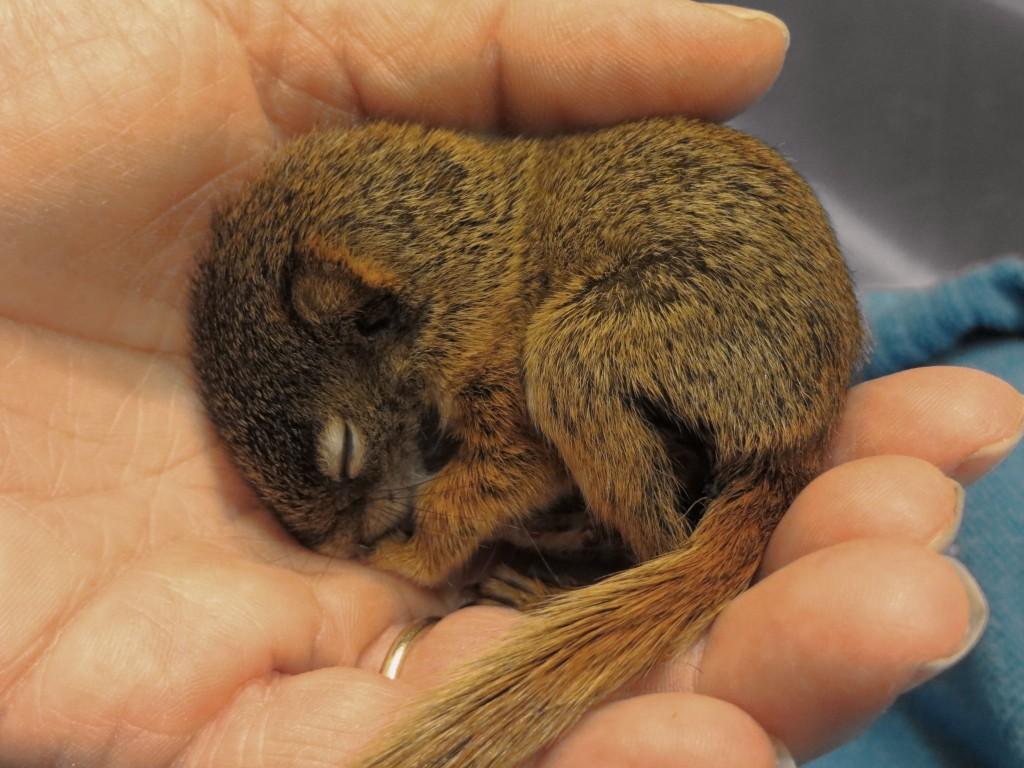 squirrelly3