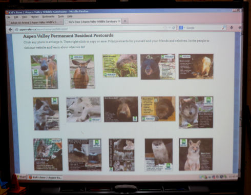 wacky-blog-animals2