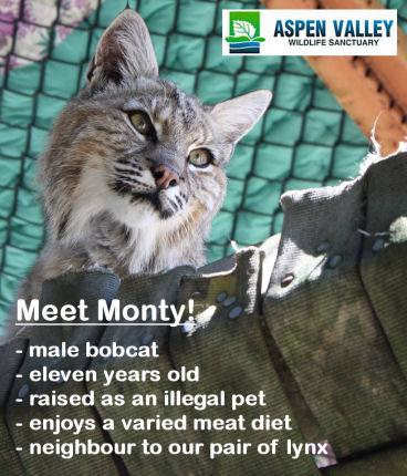 wacky-blog-monty