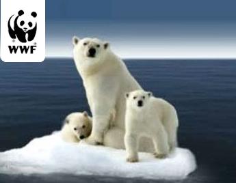 polar-bear-wwf