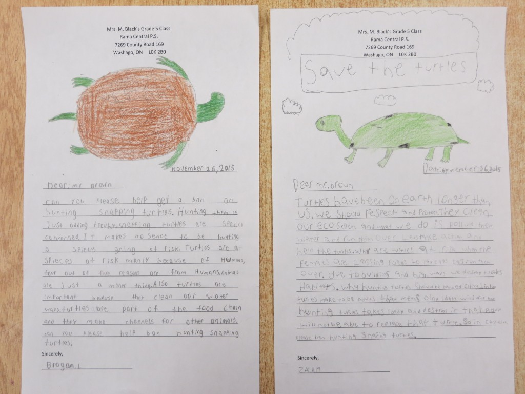 Essay writing on turtle graded sample mcat essays