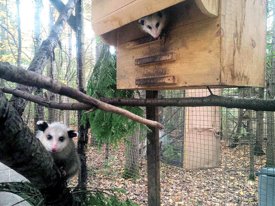 opossum-box