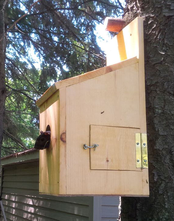 squirrel-box