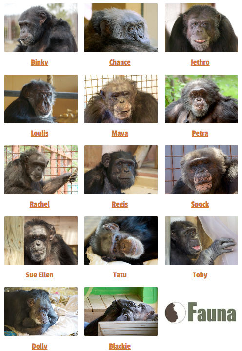 fauna-chimps-collage